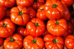 Tomatoes with stalks in a market Royalty Free Stock Photography