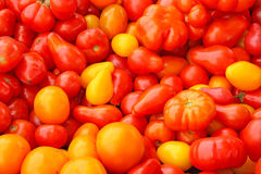 Tomatoes on stand table Stock Images