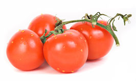 Tomatoes on stem. Fresh tomatoes on stem, covered with drops of water Royalty Free Stock Images