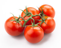 Tomatoes on stem. Isolated on white background Royalty Free Stock Photos