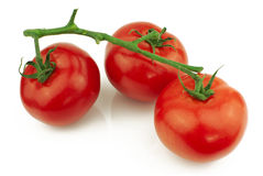 Tomatoes on stem Royalty Free Stock Image