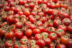 Tomatoes street market Provence Royalty Free Stock Image