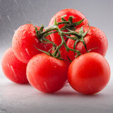 Tomatoes in studio with rain splashes and drops Royalty Free Stock Photos