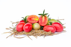 Tomatoes style � Lycopersicon exculentum Mill Stock Image