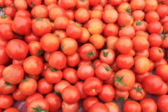 Tomatoes in a supermarket stock image