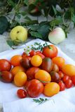 Tomatoes on the table. A lot of cherry tomatoes on a white napkin royalty free stock photos