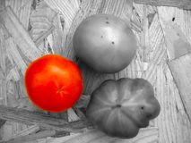 Tomatoes on a table in contrast colors red, black and white. Tomatoes on a table in contrast colors green, red, black and white. Harvest of autumn background or Royalty Free Stock Photo