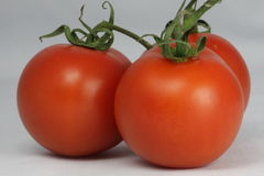 Tomatoes. On a table photographied in studio Stock Images