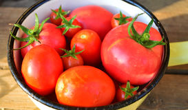 Tomatoes in a tin bowl Royalty Free Stock Photography