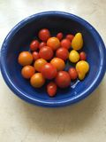 Tomatoes. Tiny tomatoes in a blue bowl red orange Stock Photography