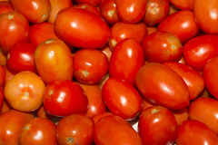 Tomatoes Stock Images