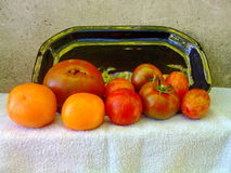 Tomatoes 16. Tomato fruits with stripes on table Royalty Free Stock Images