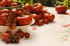 Tomatoes Tomatoes Stock Photography