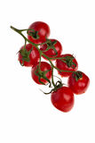 Tomatoes on a twig. Tomatoes on a twig isolated over a white background Stock Image