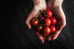 Tomatoes twig in the hand on the black stone table Stock Photography