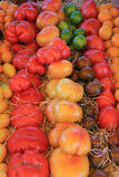 Tomatoes in various colors Stock Photography