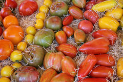 Tomatoes in various colors and shapes Stock Images