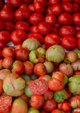 Tomatoes in various shapes sizes and colours. Stock Photos