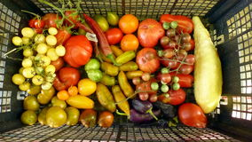 Tomatoes 33. Various types of tomatoes and white cucumber Stock Photo