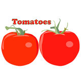 Tomatoes vector Royalty Free Stock Photos