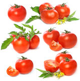 Tomatoes vegetable Stock Photography