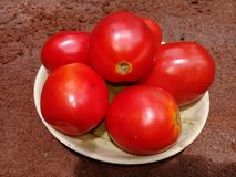 Tomatoes. From vegetable garden ,tasty, healthy, nutrition Royalty Free Stock Image
