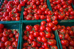 Tomatoes at vegetables market. Stock Image