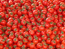 Tomatoes, Vegetables, Red Stock Photos