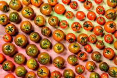 Tomatoes and vegetables in season. Royalty Free Stock Photo