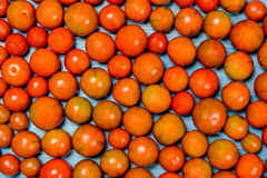 Tomatoes and vegetables in season. Stock Images