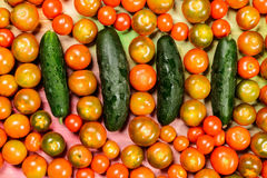 Tomatoes and vegetables in season. Royalty Free Stock Images