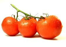 Tomatoes vine Royalty Free Stock Image