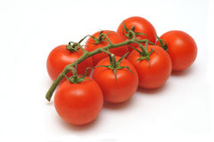 Tomatoes on the vine. Isolated on white background Stock Images