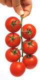 Tomatoes on the vine. Isolated on white background Royalty Free Stock Photography