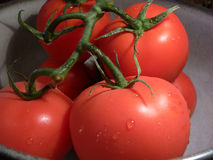 Tomatoes on vine. Juicy, freshly washed tomatoes on vine Royalty Free Stock Photography
