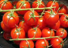 Tomatoes on the vine. Many cherry tomatoes on the vine stock image