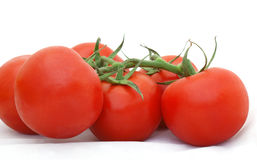 Tomatoes on the vine Stock Image