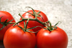 Tomatoes on the vine. Vine tomatoes close up against a grainy background Royalty Free Stock Image
