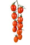 Tomatoes on a vine. Fresh and ripe tomatoes on a vine isolated on white Royalty Free Stock Images