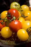 Tomatoes on the vine. Royalty Free Stock Image