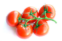 Tomatoes On A Vine. Five tomatoes on a vine Stock Photography