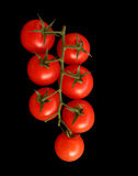 Tomatoes On The Vine. Seven red ripe tomatoes on the vine, on a black background royalty free stock photos