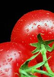 Tomatoes on Vine. Two ripe tomatoes on vine covered in water droplets. SDOF Stock Photos