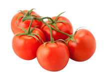 Tomatoes on the Vine isolated Stock Photography