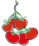 Tomatoes on the Vine. NVegetable vector illustration.nTomato vector illustration epsn Royalty Free Stock Image