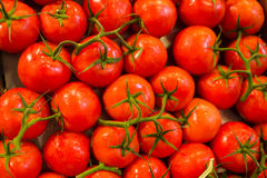 Tomatoes on the Vine Royalty Free Stock Photo