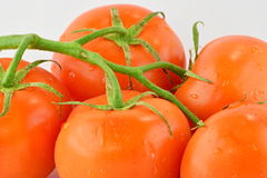 Tomatoes on the vine. Tomatoes with vine on a plain white background royalty free stock images