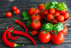 Tomatoes on vine, red chilli and green basil Stock Images