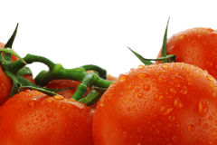 Tomatoes on the vine with water droplets Stock Image