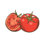 Tomatoes in vintage style. Line art illustration Stock Photo